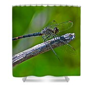 Blue Dragonfly 5 Shower Curtain