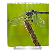 Blue Dragonfly 6 Shower Curtain