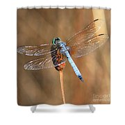 Blue Dragonfly Square Shower Curtain
