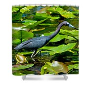 Reddish Egret Among The Lily Pads Shower Curtain