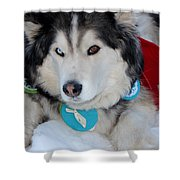 Blue Eye Brown Eye Shower Curtain