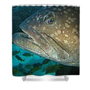 Blue-eyed Grouper Fish Shower Curtain