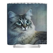 Blue Eyed Queen Shower Curtain