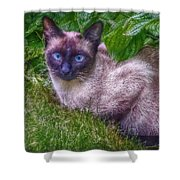 Blue Eyes Shower Curtain