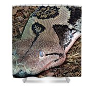 Blue Eyes Snake Shower Curtain