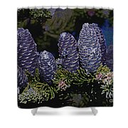 Blue Fir Cones 2 Outlined Shower Curtain