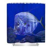 Blue Fish   #4990 Shower Curtain