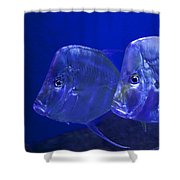 Blue Fish   #4991 Shower Curtain