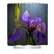 Blue Flag Iris Flower Shower Curtain