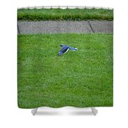 Blue Flight Shower Curtain