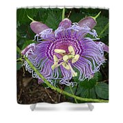 Blue Flower Blooming Shower Curtain