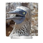 Blue Footed Boobie Galapagos Shower Curtain