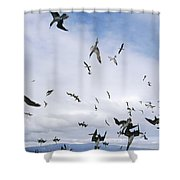 Blue-footed Booby Diving For Herring Shower Curtain