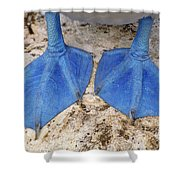 Blue-footed Booby Feet  Shower Curtain