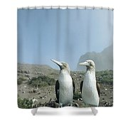 Blue-footed Booby Pair With Nesting Shower Curtain