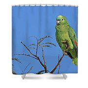 Blue-fronted Parrot Emas National Park Shower Curtain