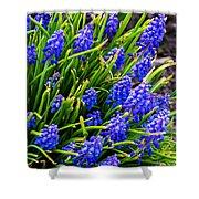 Blue Grape Hyacinth Shower Curtain