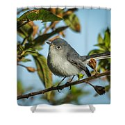 Blue-gray Gnatcatcher Shower Curtain