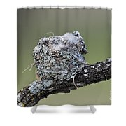 Blue-gray Gnatcatcher Nest Shower Curtain