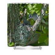 Blue-gray Gnatcatcher Nest Dsb261 Shower Curtain