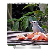 Blue-grey Tanager 1 Shower Curtain