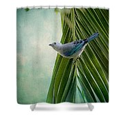 Blue Grey Tanager On A Palm Tree Shower Curtain