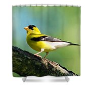 Blue Heart Goldfinch Shower Curtain