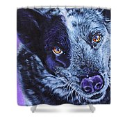 Blue Heeler Shower Curtain