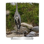 Blue Heron   #0303 Shower Curtain