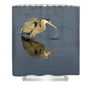 Blue Heron   #7783 Shower Curtain