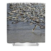 Blue Heron And Fish   #9619 Shower Curtain
