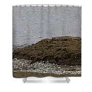 Blue Heron And Fish   #9642 Shower Curtain