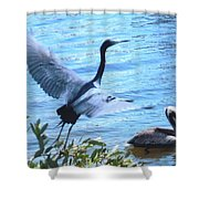 Blue Heron And Pelican Shower Curtain