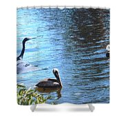 Blue Heron And Pelicans Shower Curtain