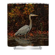 Blue Heron In The Fall Shower Curtain