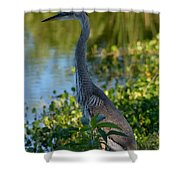 Blue Heron In The White Light Shower Curtain