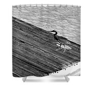 Blue Heron On Dock - Grayscale Shower Curtain