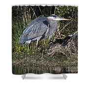 Blue Heron On The Hunt Shower Curtain