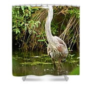 Blue Heron Reflection Shower Curtain