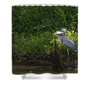 Blue Heron With A Fish-signed Shower Curtain
