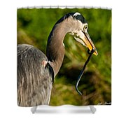 Blue Heron With A Snake In Its Bill Shower Curtain