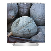Blue Hubbard Squash Shower Curtain