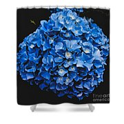 Blue Hydrangea 1 Shower Curtain