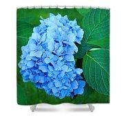Blue Hydrangea Flower Art Prints Nature Floral Shower Curtain