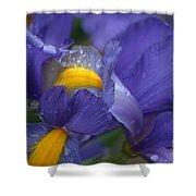 Blue Iris Close Up Shower Curtain