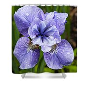 Blue Iris Flower Raindrops Garden Virginia Shower Curtain