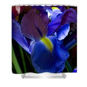 Blue Iris Shower Curtain by Joann Vitali