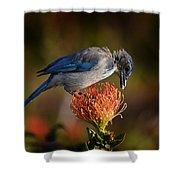 Blue Jay 1 Shower Curtain