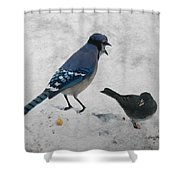 Blue Jay And Junco Shower Curtain