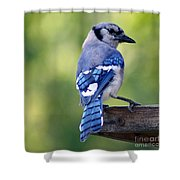 Blue Jay At Feeder Shower Curtain